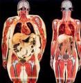 ¿Quieres perder peso? Contamos con la última tecnología para estudiar tu composición corporal